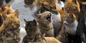 gattoparco felini milano