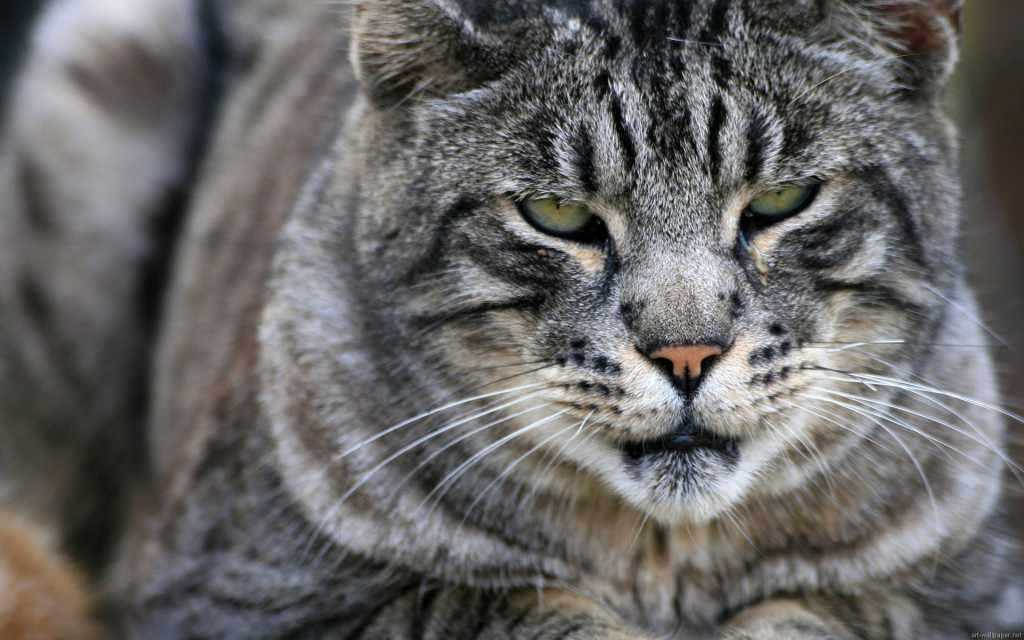 gattoparco milano
