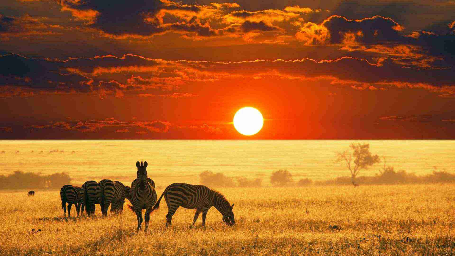 safari milano kenia