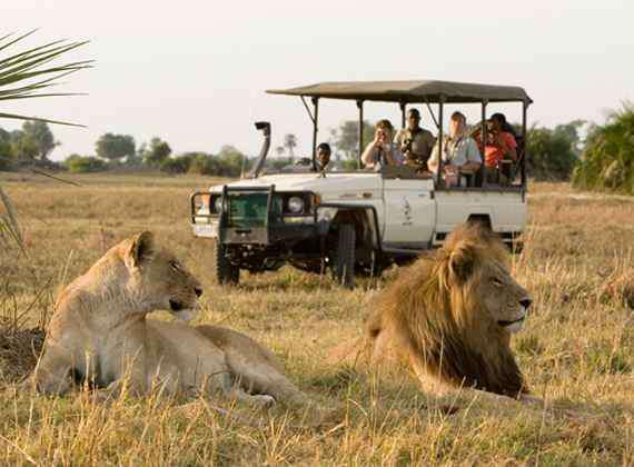 safari milano