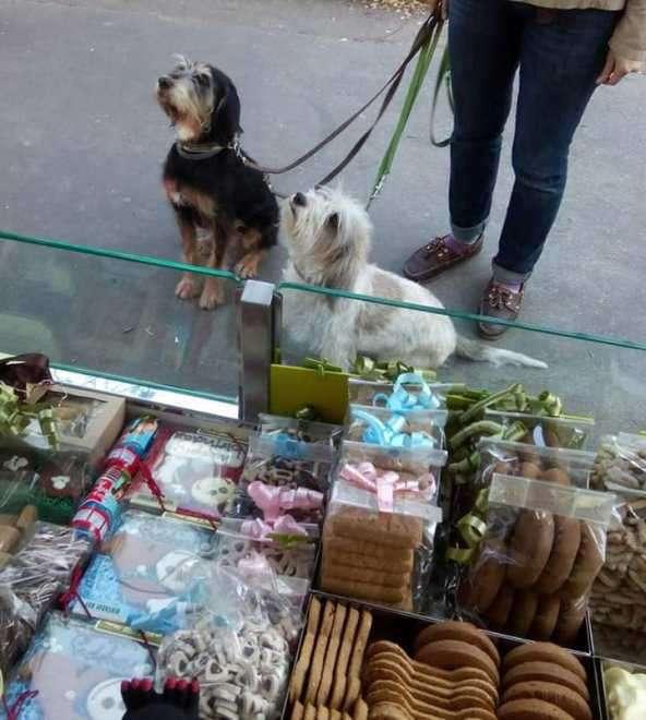 street food cani milano