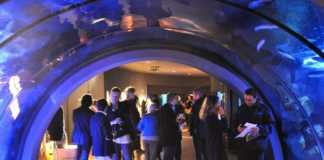 apertura gratuita acquario civico milano