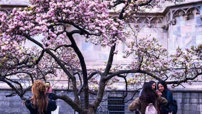 primavera milano GLI ANGOLI FIORITI PIÙ BELLI IN CITTÀ