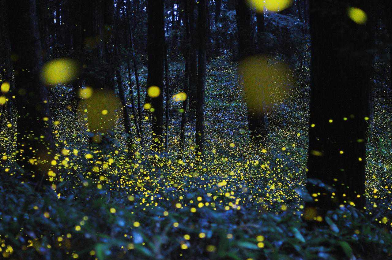 LUSIROEULA lucciole al parco delle cave