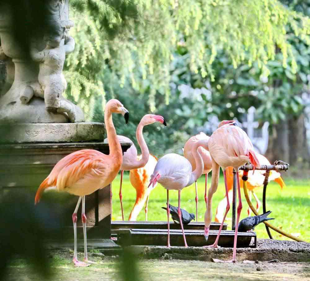 villa invernizzi fenicotteri rosa