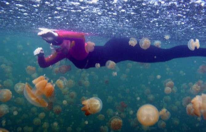 puntura di meduse