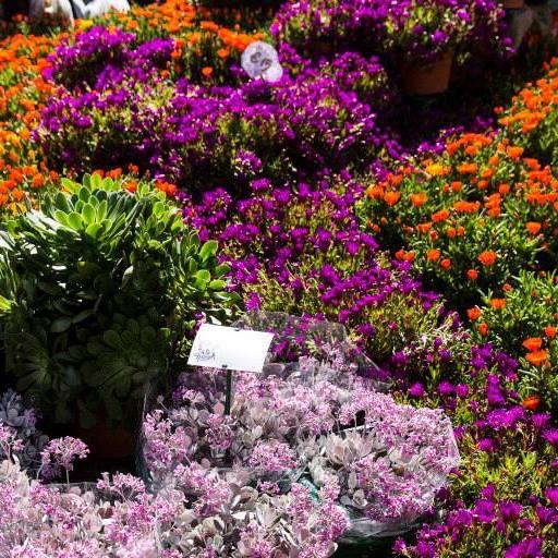 floralia milano