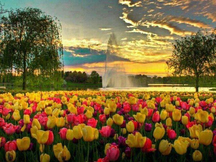 Camminare tra i tulipani italiani a milano cornaredo for Tulipani italiani