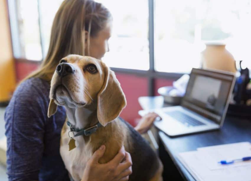 unicredit cani al lavoro