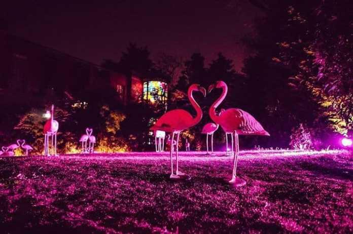 Flamingos Design Party | SALONE DEL MOBILE 2019