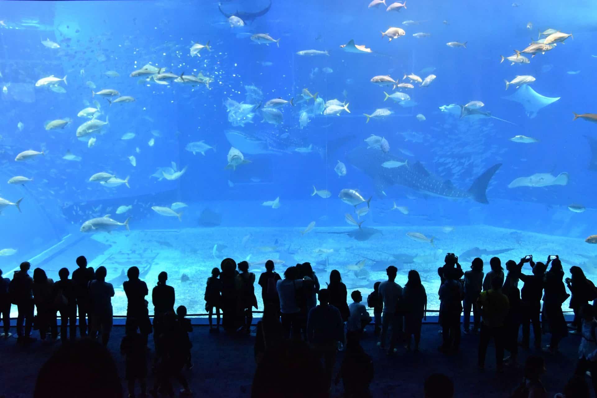 acquario di Genova biglietti scontati