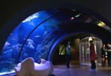 acquario civico di milano ingresso gratuito