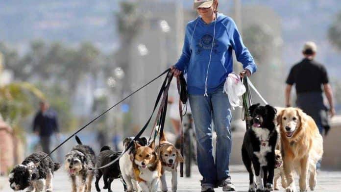 comune di milano cani pipi multe