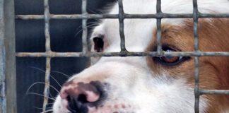 abbandono cani coronavirus
