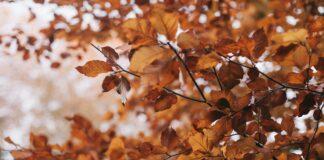 colori dell'autunno