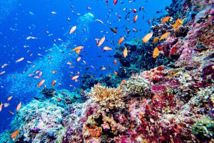 BICOCCA: siglata nuova partnership con le Maldive per la tutela della barriera corallina