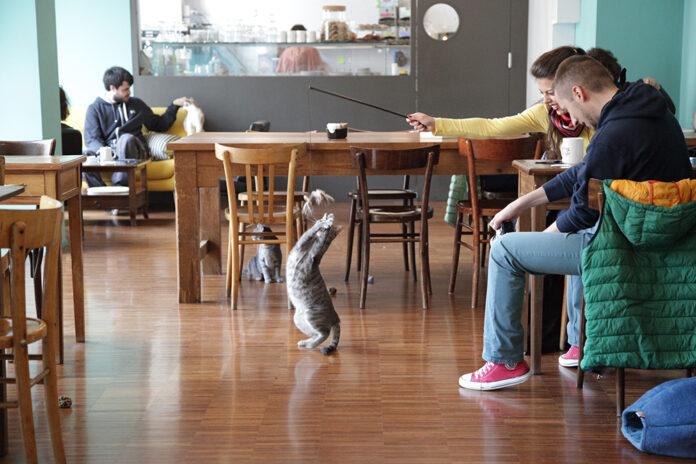 crazy cat café locale dei gatti milano
