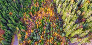bosco delle stem
