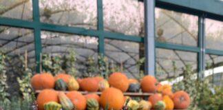 garden festival autunno